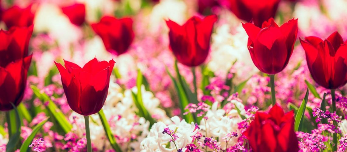 butchart-gardens-5144189_960_720
