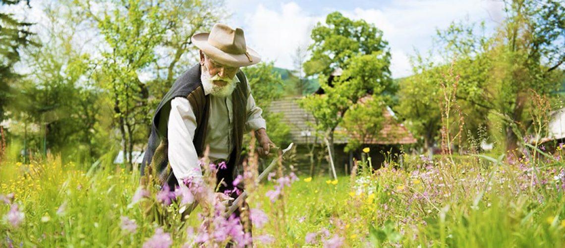 old-man-gardening